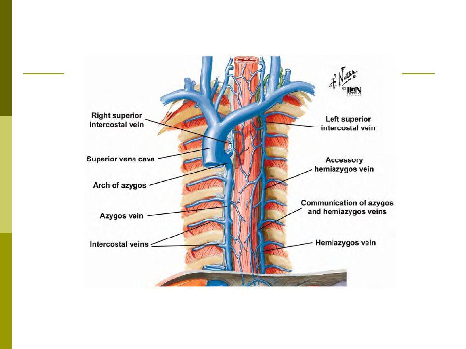 Periferal sinir tümörleri  Küçük bir grupta kompresyon nedeni ile parestezi ve ağrıya neden olurlar.