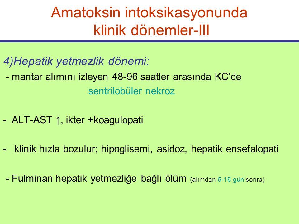 Amatoksin intoksikasyonunda klinik dönemler-III 4)Hepatik yetmezlik dönemi: - mantar alımını izleyen 48-96 saatler arasında KC'de sentrilobüler nekroz - ALT-AST ↑, ikter +koagulopati -klinik hızla bozulur; hipoglisemi, asidoz, hepatik ensefalopati - Fulminan hepatik yetmezliğe bağlı ölüm (alımdan 6-16 gün sonra)
