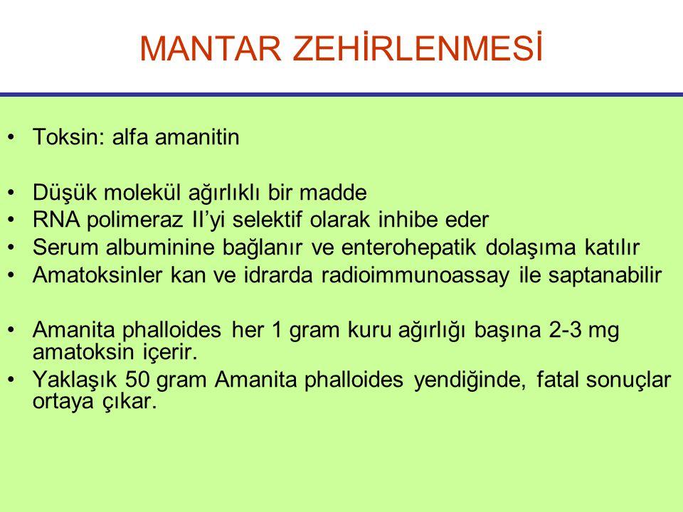 MANTAR ZEHİRLENMESİ Toksin: alfa amanitin Düşük molekül ağırlıklı bir madde RNA polimeraz II'yi selektif olarak inhibe eder Serum albuminine bağlanır ve enterohepatik dolaşıma katılır Amatoksinler kan ve idrarda radioimmunoassay ile saptanabilir Amanita phalloides her 1 gram kuru ağırlığı başına 2-3 mg amatoksin içerir.