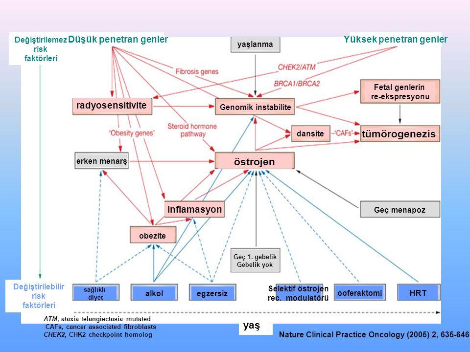 östrojen tümörogenezis Genomik instabilite dansite radyosensitivite obezite yaş inflamasyon Fetal genlerin re-ekspresyonu erken menarş yaşlanma Geç menapoz Geç 1.