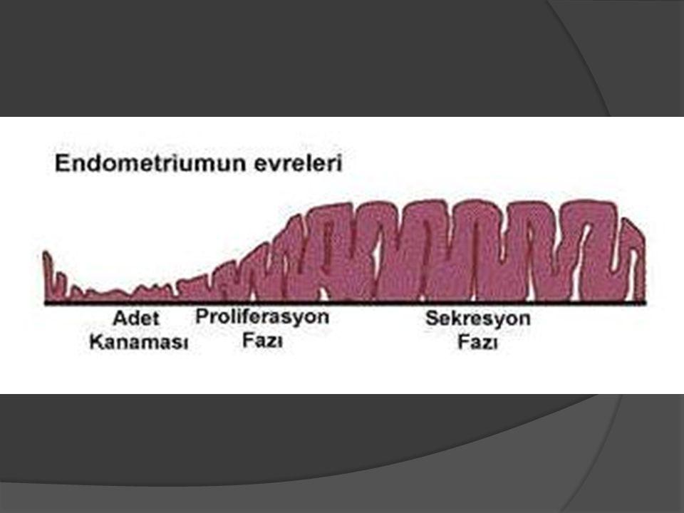 Endometrium Üzerindeki Etki Günler Mirena kullanımı Normal siklus