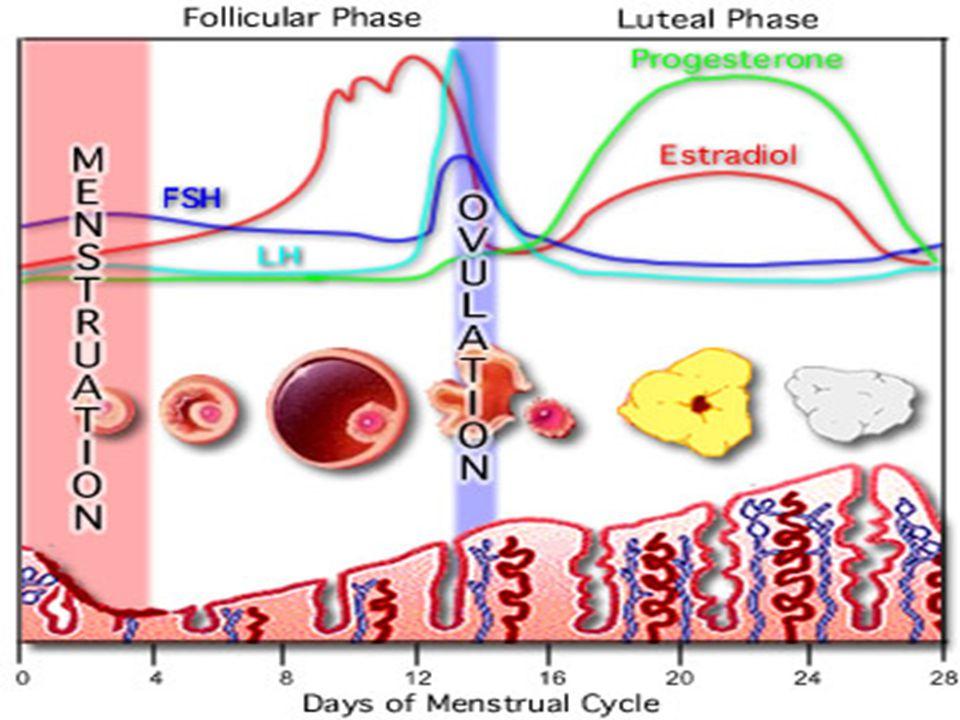 Over fonksiyonları etkilenmez  Mirena kullanıcılarında menstruel kanaması olsun ya da olmasın over fonksiyonları devam eder ve estradiol düzeyleri normal fertil kadınlardakine benzer.