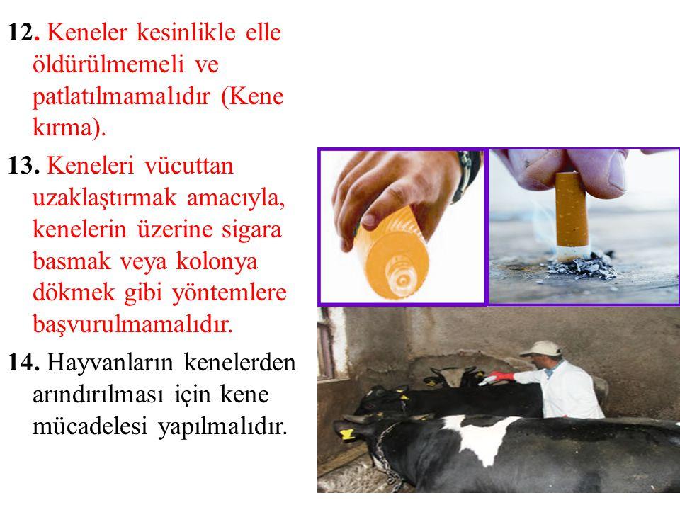12. Keneler kesinlikle elle öldürülmemeli ve patlatılmamalıdır (Kene kırma). 13. Keneleri vücuttan uzaklaştırmak amacıyla, kenelerin üzerine sigara ba