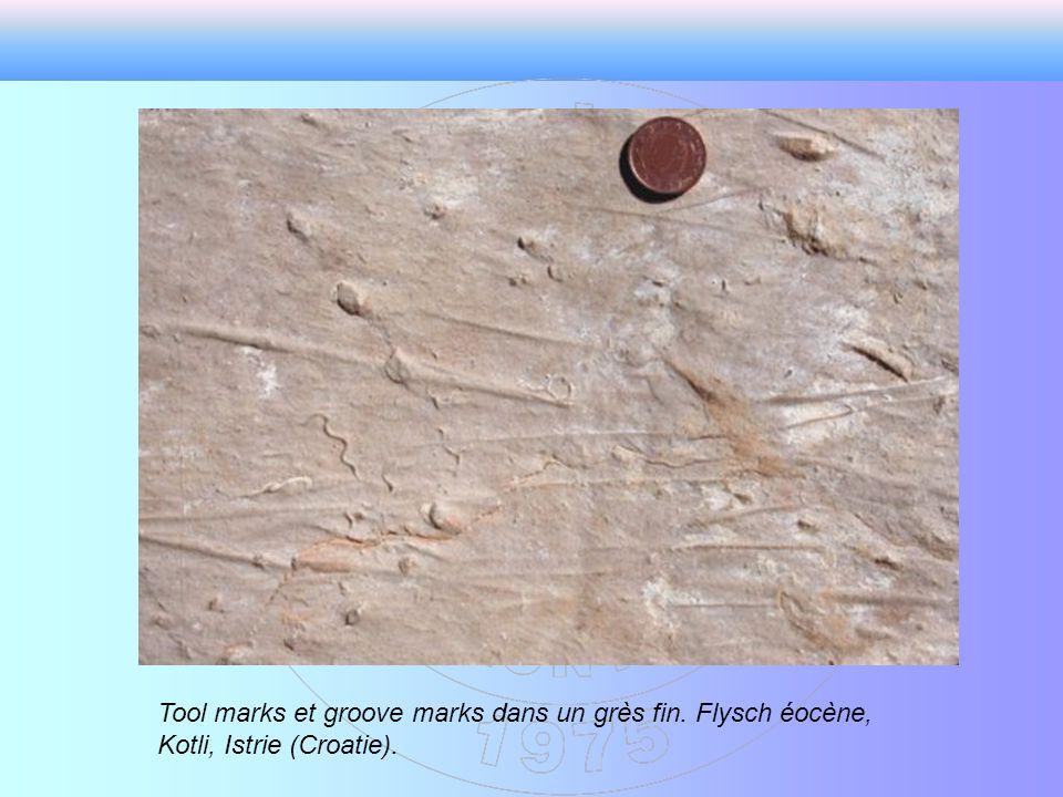 Tool marks et groove marks dans un grès fin. Flysch éocène, Kotli, Istrie (Croatie).