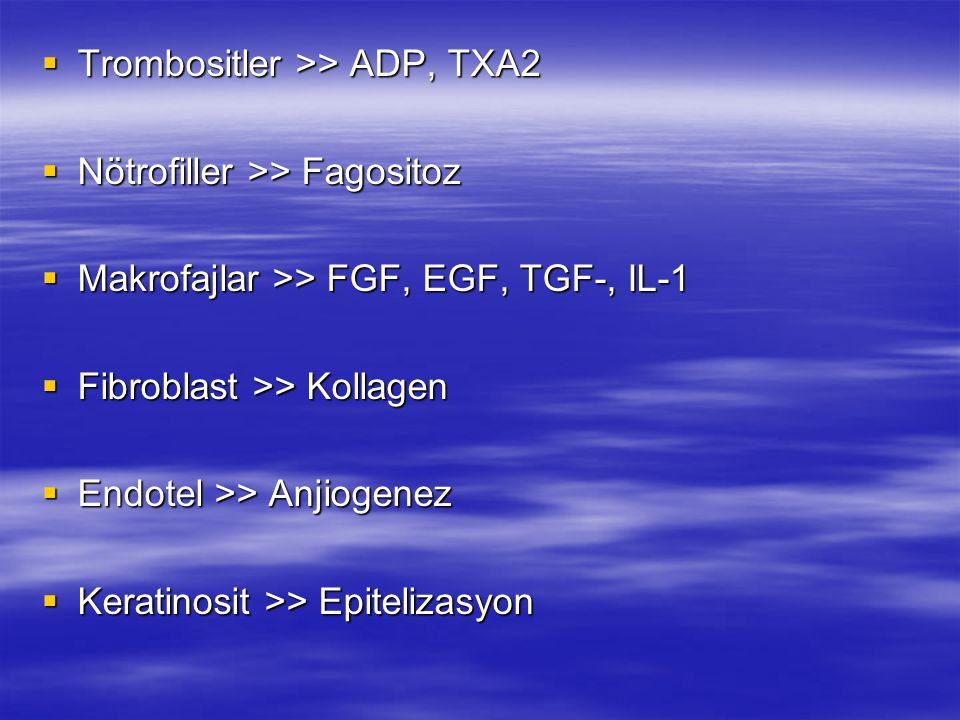  Trombositler >> ADP, TXA2  Nötrofiller >> Fagositoz  Makrofajlar >> FGF, EGF, TGF-, IL-1  Fibroblast >> Kollagen  Endotel >> Anjiogenez  Kerati
