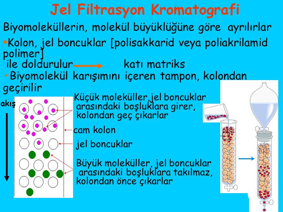 Jel Filtrasyon Kromatografi Biyomoleküllerin, molekül büyüklüğüne göre ayrılırlar Kolon, jel boncuklar [polisakkarid veya poliakrilamid polimer] ile d