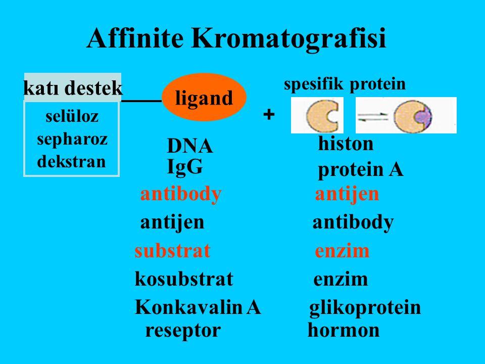Affinite Kromatografisi katı destek ligand spesifik protein selüloz sepharoz dekstran DNA IgG histon protein A antibody antijen antijen antibody subst