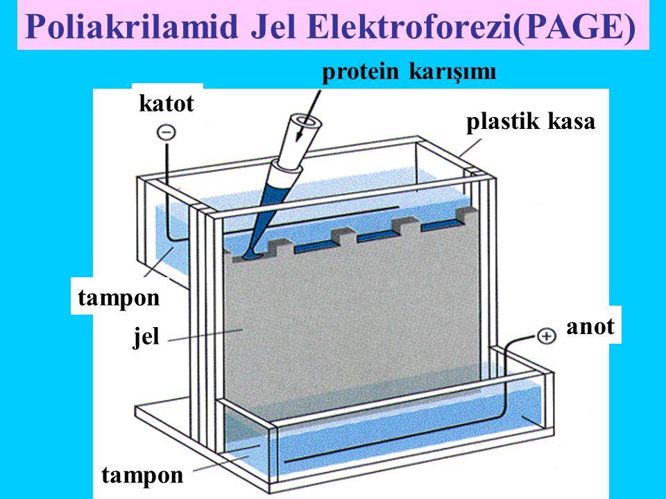plastik kasa anot katot tampon jel protein karışımı Poliakrilamid Jel Elektroforezi(PAGE)