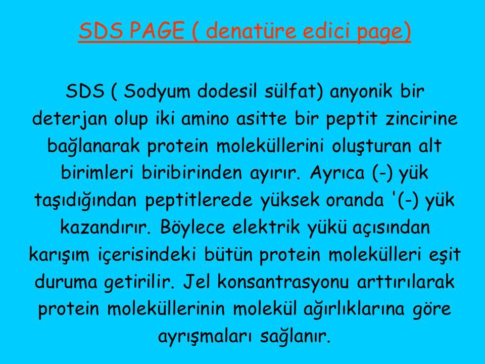 SDS PAGE ( denatüre edici page) SDS ( Sodyum dodesil sülfat) anyonik bir deterjan olup iki amino asitte bir peptit zincirine bağlanarak protein molekü
