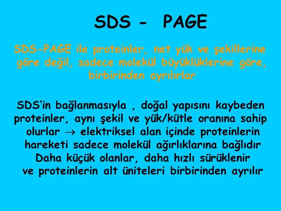 SDS'in bağlanmasıyla, doğal yapısını kaybeden proteinler, aynı şekil ve yük/kütle oranına sahip olurlar  elektriksel alan içinde proteinlerin hareket
