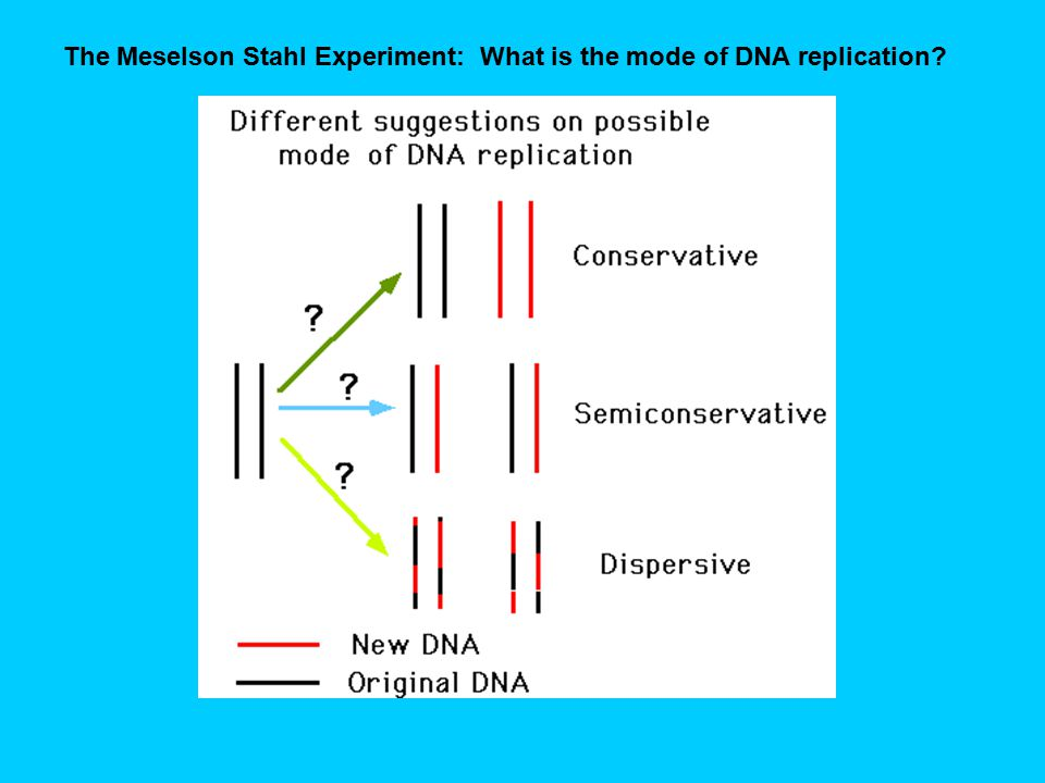 The Meselson Stahl Experiment: What is the mode of DNA replication?