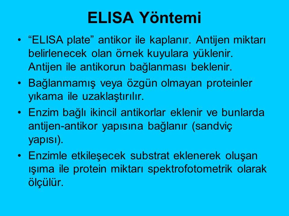 """ELISA Yöntemi """"ELISA plate"""" antikor ile kaplanır. Antijen miktarı belirlenecek olan örnek kuyulara yüklenir. Antijen ile antikorun bağlanması beklenir"""