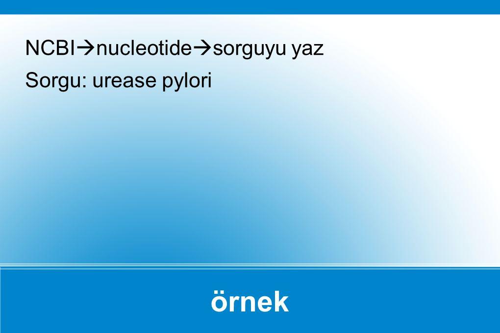 örnek NCBI  nucleotide  sorguyu yaz Sorgu: urease pylori