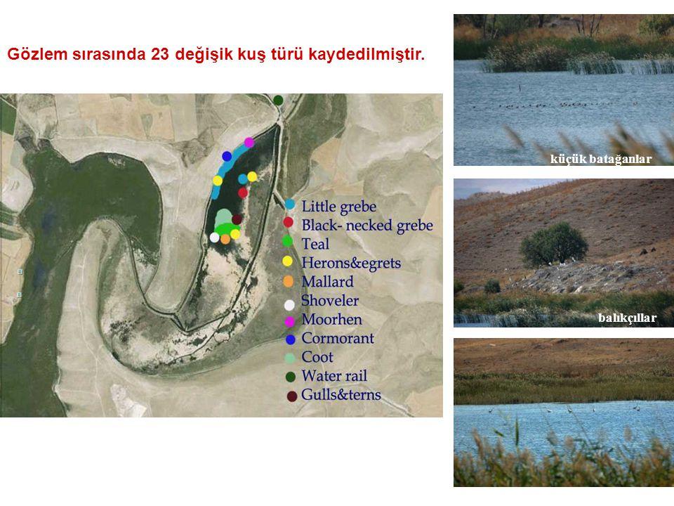 Gözlem sırasında 23 değişik kuş türü kaydedilmiştir. küçük batağanlar balıkçıllar