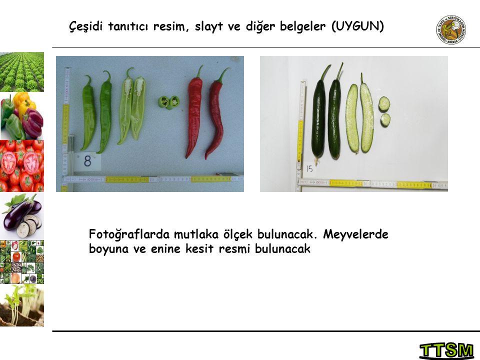 Çeşidi tanıtıcı resim, slayt ve diğer belgeler (UYGUN) Fotoğraflarda mutlaka ölçek bulunacak. Meyvelerde boyuna ve enine kesit resmi bulunacak