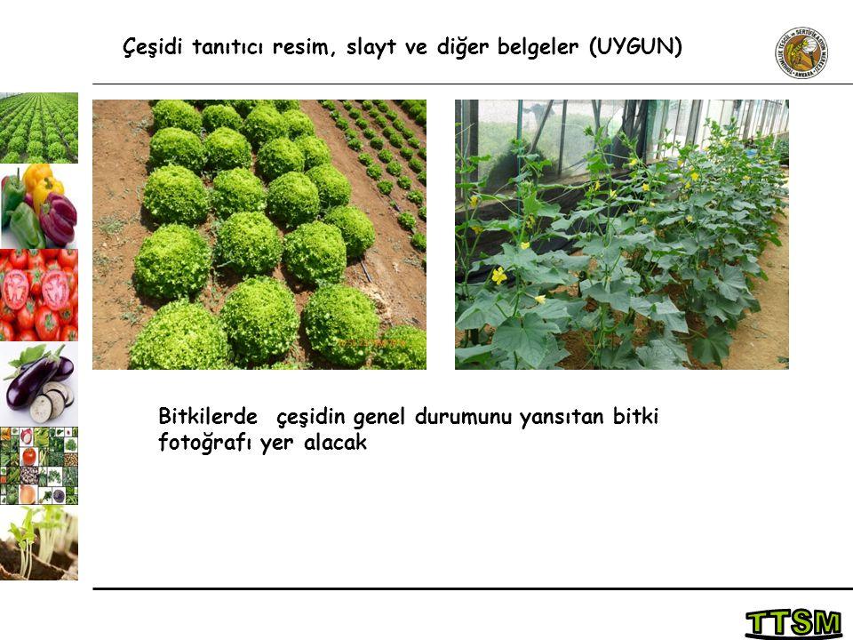 Çeşidi tanıtıcı resim, slayt ve diğer belgeler (UYGUN) Bitkilerde çeşidin genel durumunu yansıtan bitki fotoğrafı yer alacak
