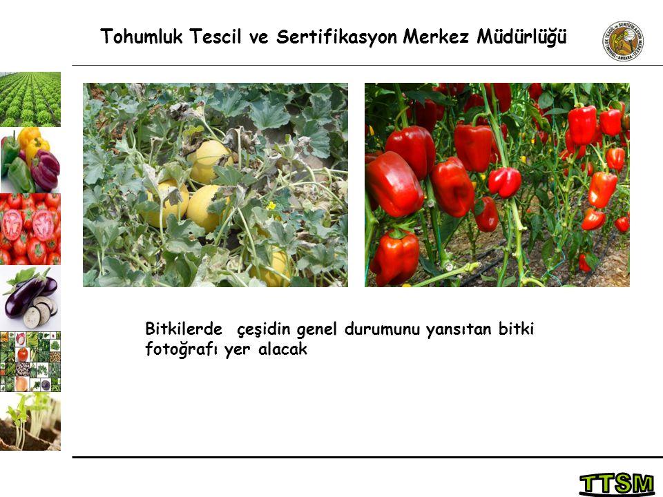 Tohumluk Tescil ve Sertifikasyon Merkez Müdürlüğü Bitkilerde çeşidin genel durumunu yansıtan bitki fotoğrafı yer alacak