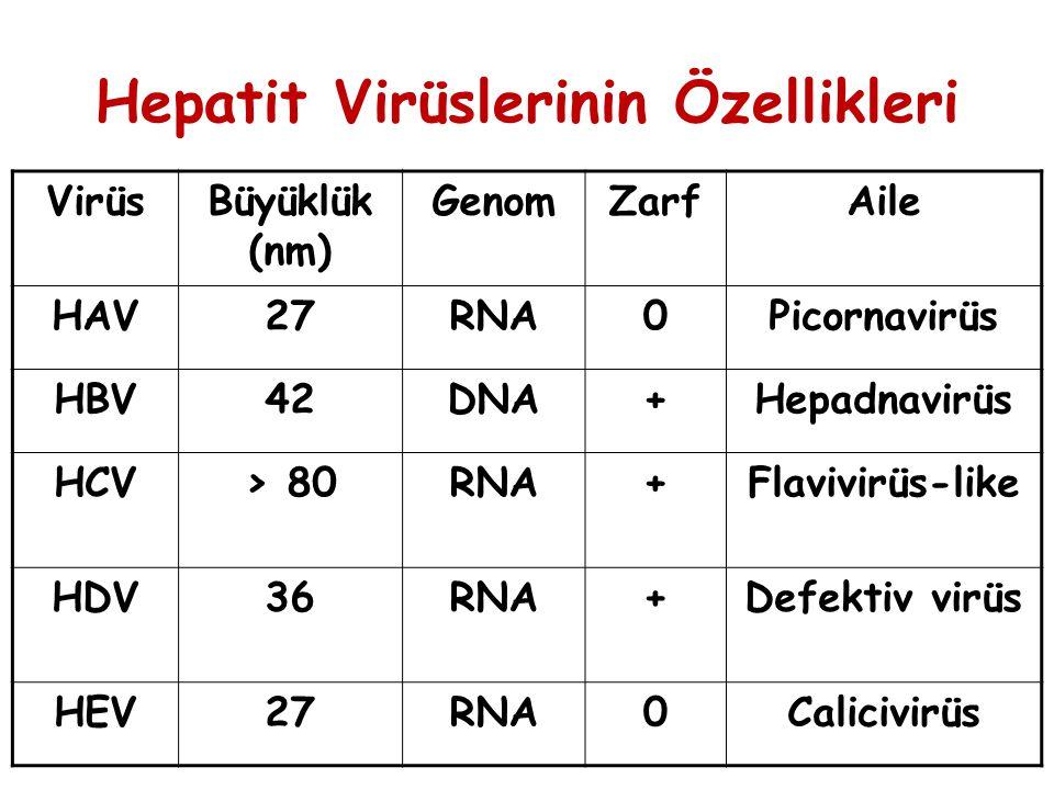 Hepatit Virüslerinin Özellikleri VirüsBüyüklük (nm) GenomZarfAile HAV27RNA0Picornavirüs HBV42DNA+Hepadnavirüs HCV> 80RNA+Flavivirüs-like HDV36RNA+Defe