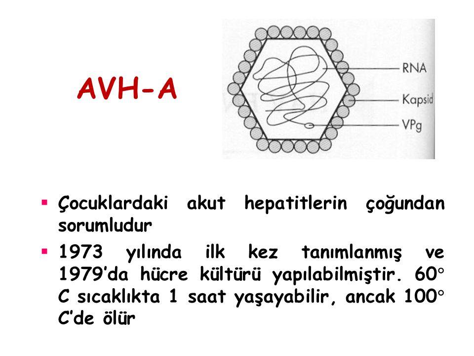 AVH-A  Çocuklardaki akut hepatitlerin çoğundan sorumludur  1973 yılında ilk kez tanımlanmış ve 1979'da hücre kültürü yapılabilmiştir. 60  C sıcaklı