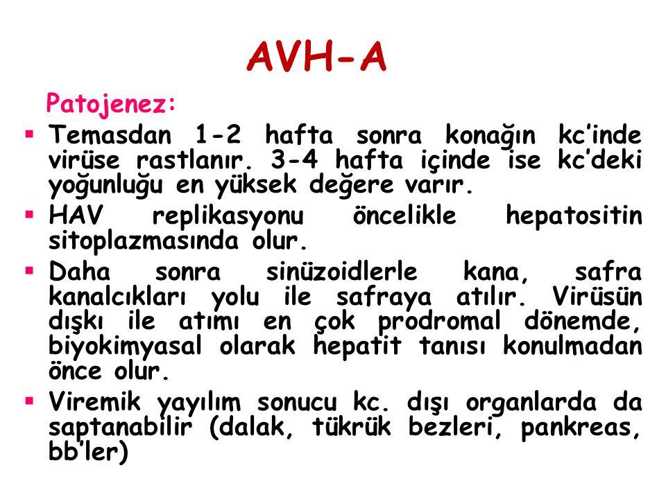 AVH-A Patojenez:  Temasdan 1-2 hafta sonra konağın kc'inde virüse rastlanır. 3-4 hafta içinde ise kc'deki yoğunluğu en yüksek değere varır.  HAV rep