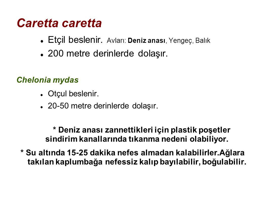 Caretta caretta Etçil beslenir. Avları: Deniz anası, Yengeç, Balık 200 metre derinlerde dolaşır. Chelonia mydas Otçul beslenir. 20-50 metre derinlerde