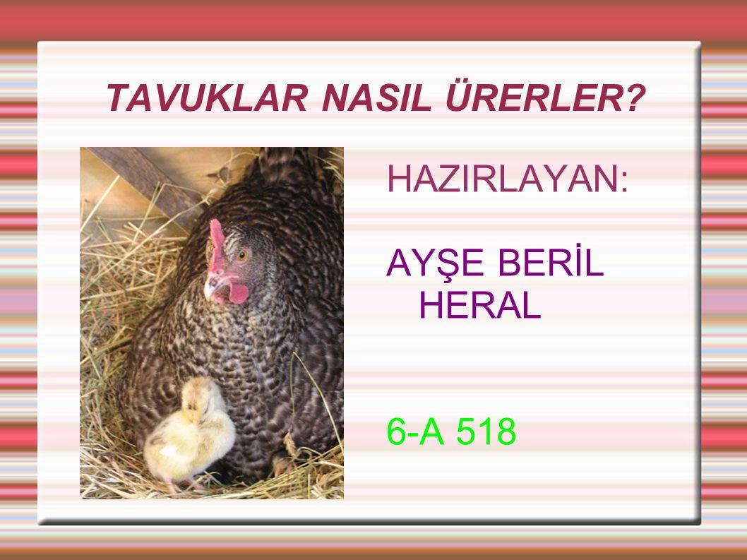 TAVUKLAR VE CİVCİVLER  Tavuklar da bütün kuşlar gibi yumurtla ile çoğalırlar.