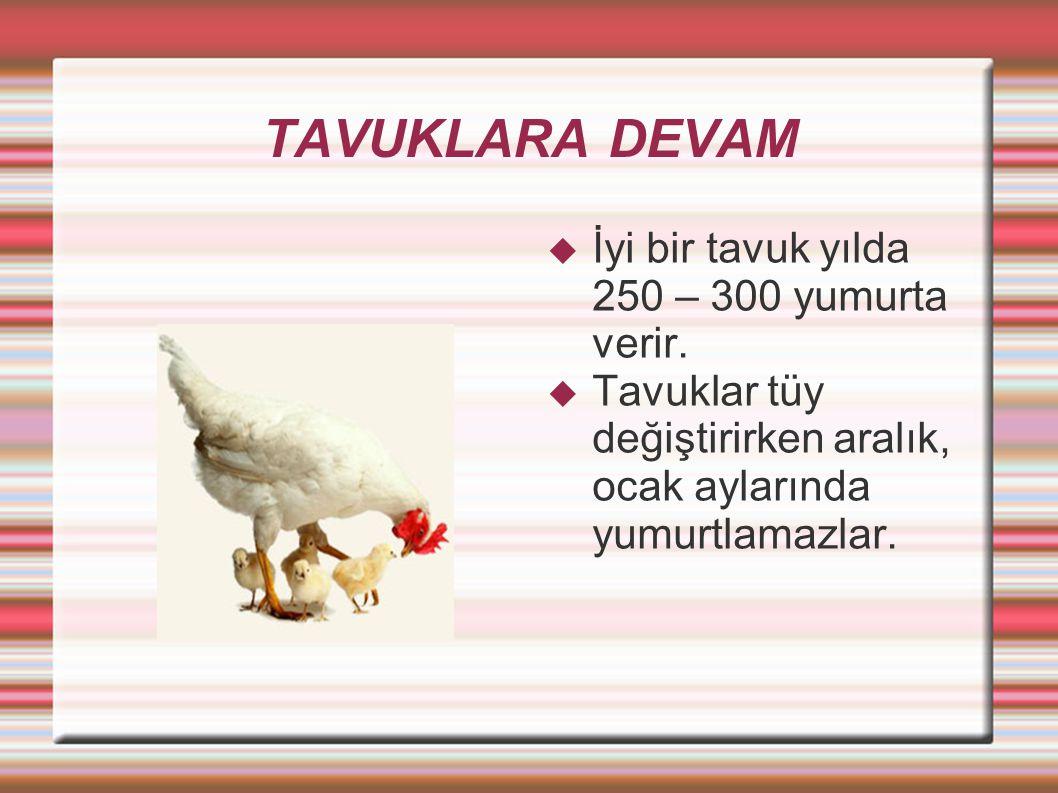 TAVUKLARA DEVAMIN DEVAMI  Tavukların kuluçka süresi 21 gündür.