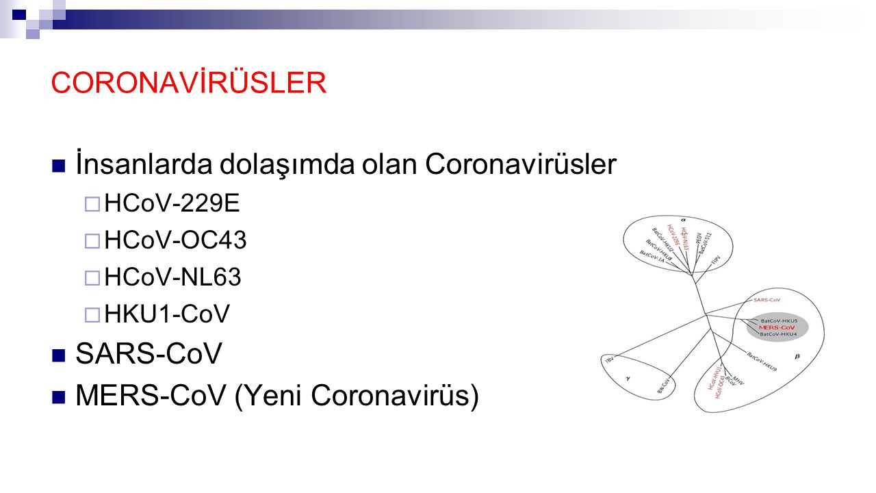CORONAVİRÜSLER İnsanlarda dolaşımda olan Coronavirüsler  HCoV-229E  HCoV-OC43  HCoV-NL63  HKU1-CoV SARS-CoV MERS-CoV (Yeni Coronavirüs)