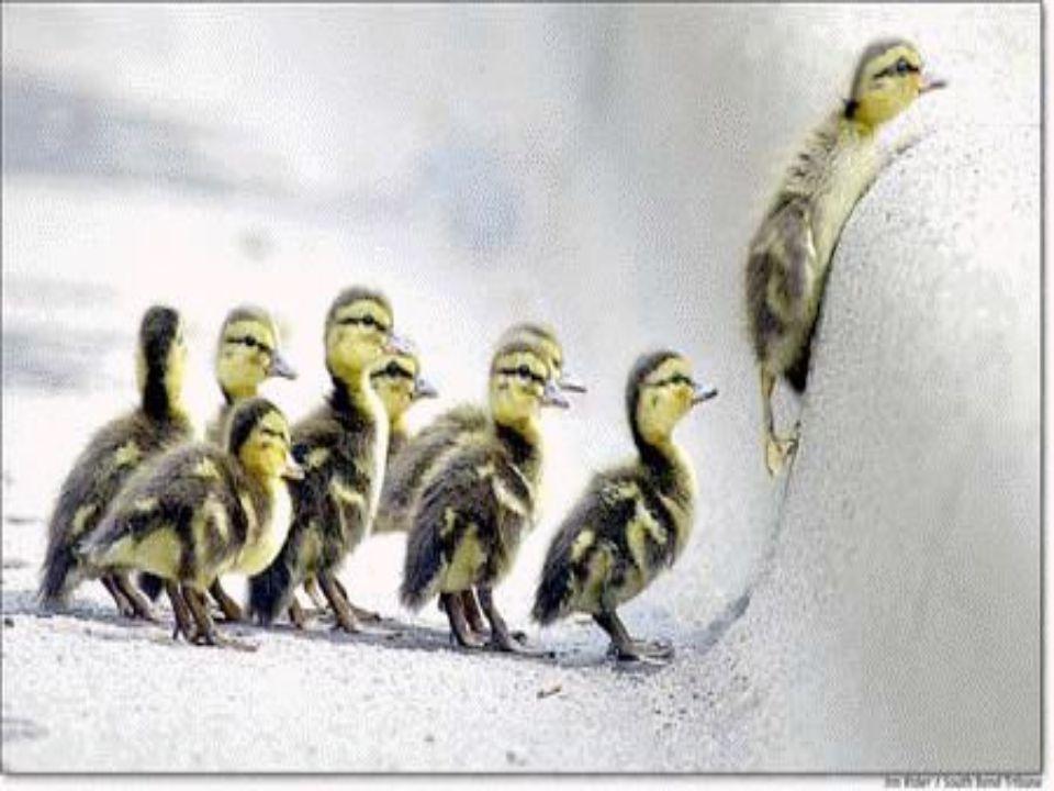 Yeni doğan ördekler henüz yüzme bilmediklerinden suda yüzmesi için bırakılması sakıncalıdır.