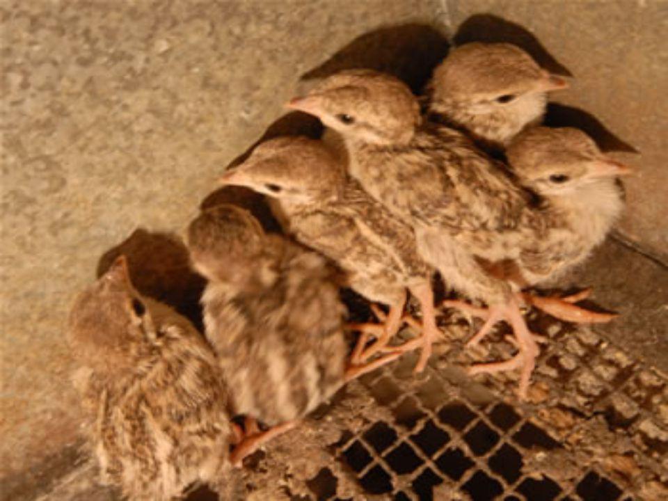 Keklik;taşlık,çalı,otlarla kaplı çok yağışlı olmayan yerlerde yaşarlar.Bitki tohumları,böcek,bitki kökleri ile beslenir.