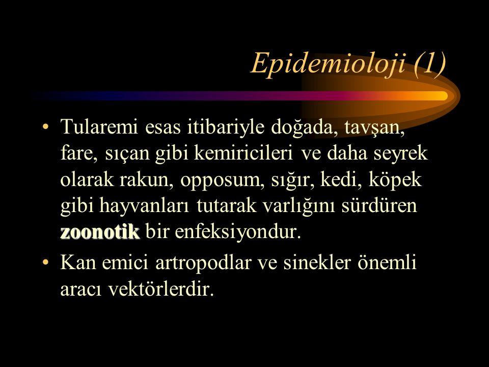 Epidemioloji (1) zoonotikTularemi esas itibariyle doğada, tavşan, fare, sıçan gibi kemiricileri ve daha seyrek olarak rakun, opposum, sığır, kedi, köp