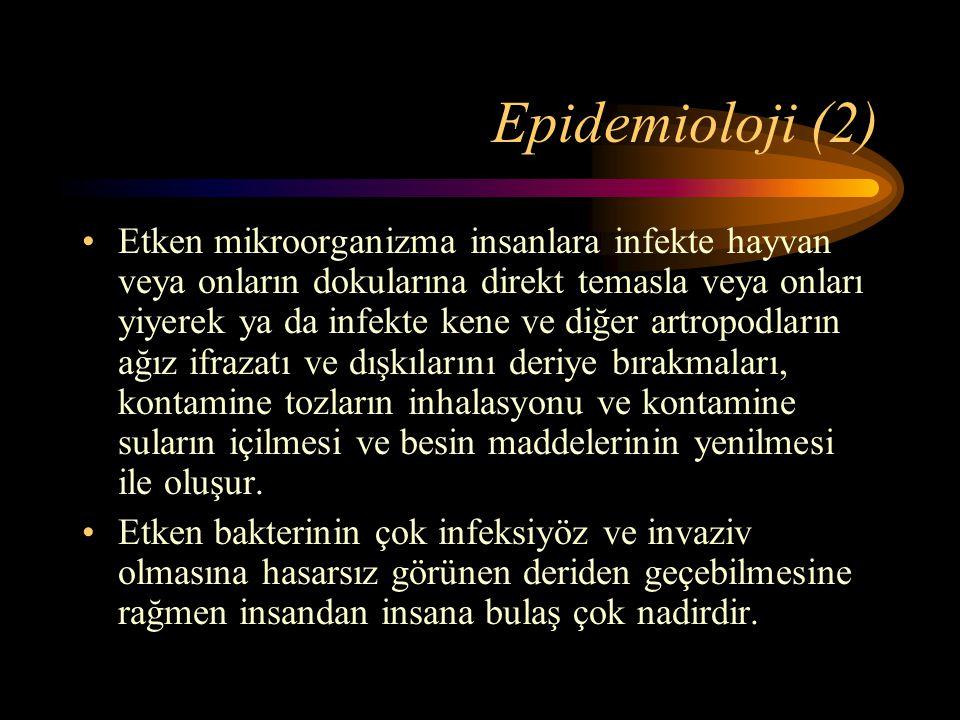 Epidemioloji (2) Etken mikroorganizma insanlara infekte hayvan veya onların dokularına direkt temasla veya onları yiyerek ya da infekte kene ve diğer