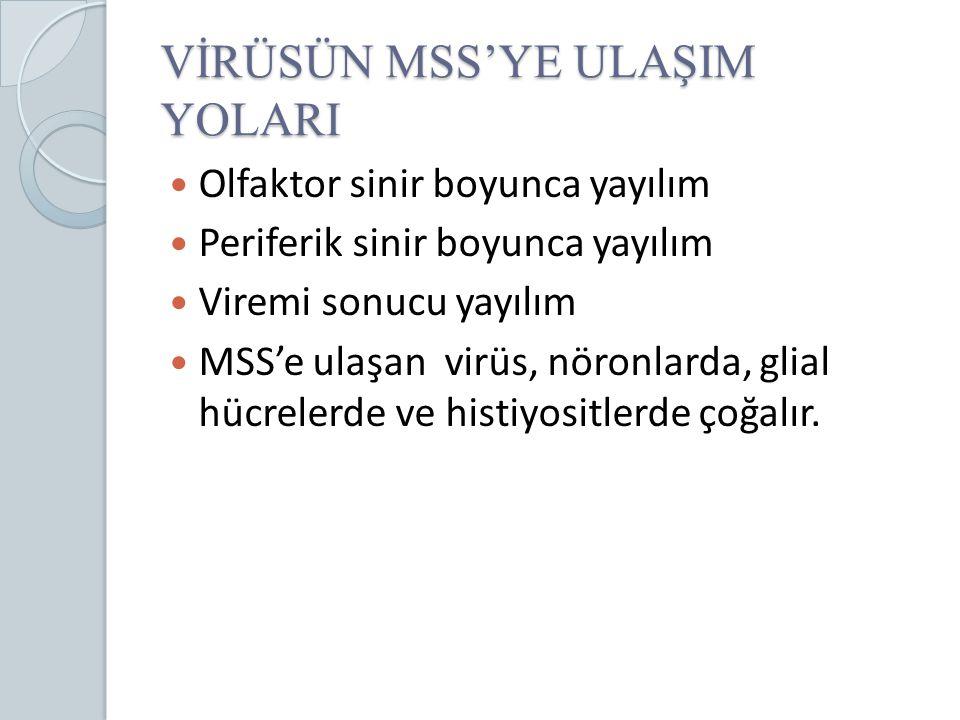 VİRÜSÜN MSS'YE ULAŞIM YOLARI Olfaktor sinir boyunca yayılım Periferik sinir boyunca yayılım Viremi sonucu yayılım MSS'e ulaşan virüs, nöronlarda, glia