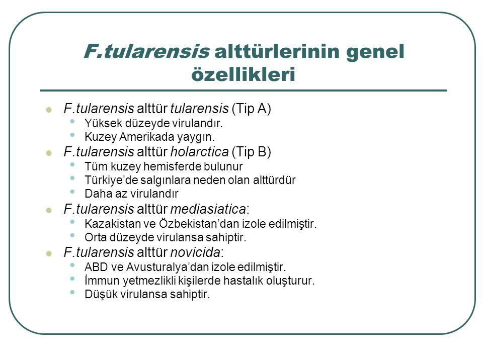 F.tularensis alttürlerinin genel özellikleri F.tularensis alttür tularensis (Tip A) Yüksek düzeyde virulandır. Kuzey Amerikada yaygın. F.tularensis al