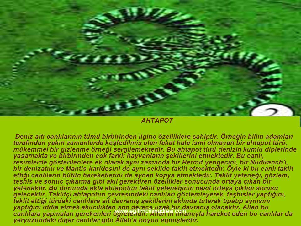 AHTAPOT Deniz altı canlılarının tümü birbirinden ilginç özelliklere sahiptir. Örneğin bilim adamları tarafından yakın zamanlarda keşfedilmiş olan faka