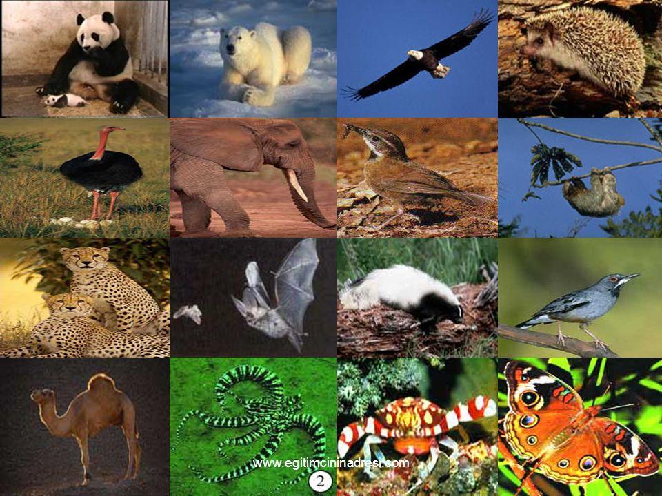 KOKARCA Hayvanların çok değişik savunma yöntemleri vardır.