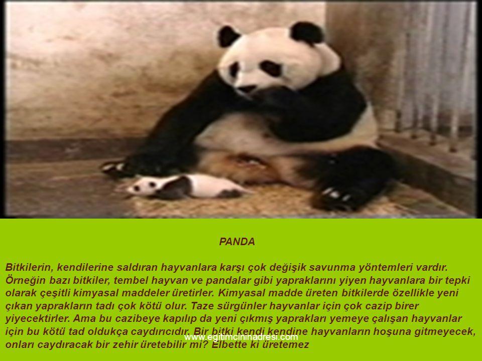 PANDA Bitkilerin, kendilerine saldıran hayvanlara karşı çok değişik savunma yöntemleri vardır. Örneğin bazı bitkiler, tembel hayvan ve pandalar gibi y