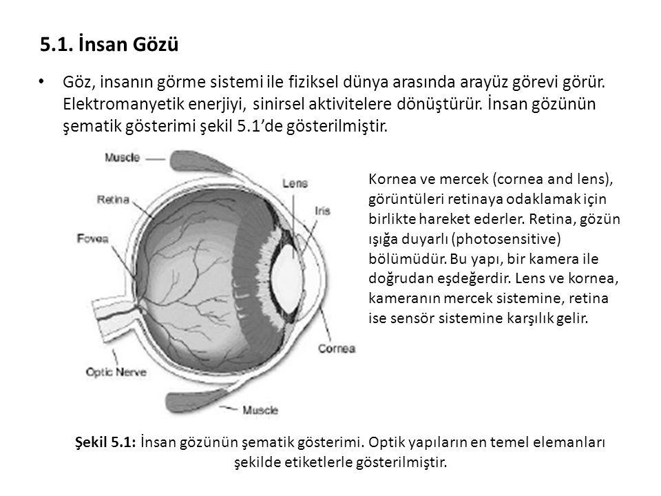 5.1. İnsan Gözü Göz, insanın görme sistemi ile fiziksel dünya arasında arayüz görevi görür. Elektromanyetik enerjiyi, sinirsel aktivitelere dönüştürür