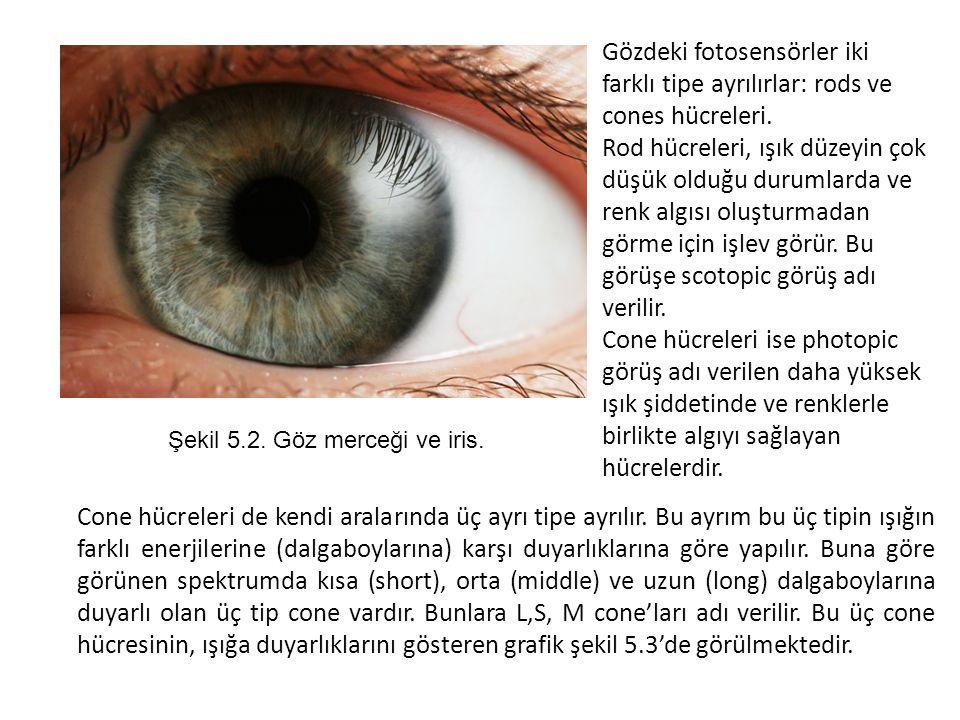 Gözdeki fotosensörler iki farklı tipe ayrılırlar: rods ve cones hücreleri. Rod hücreleri, ışık düzeyin çok düşük olduğu durumlarda ve renk algısı oluş