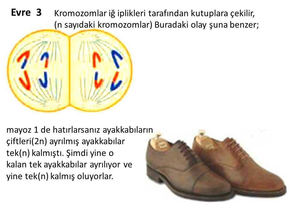 Evre 3 mayoz 1 de hatırlarsanız ayakkabıların çiftleri(2n) ayrılmış ayakkabılar tek(n) kalmıştı. Şimdi yine o kalan tek ayakkabılar ayrılıyor ve yine