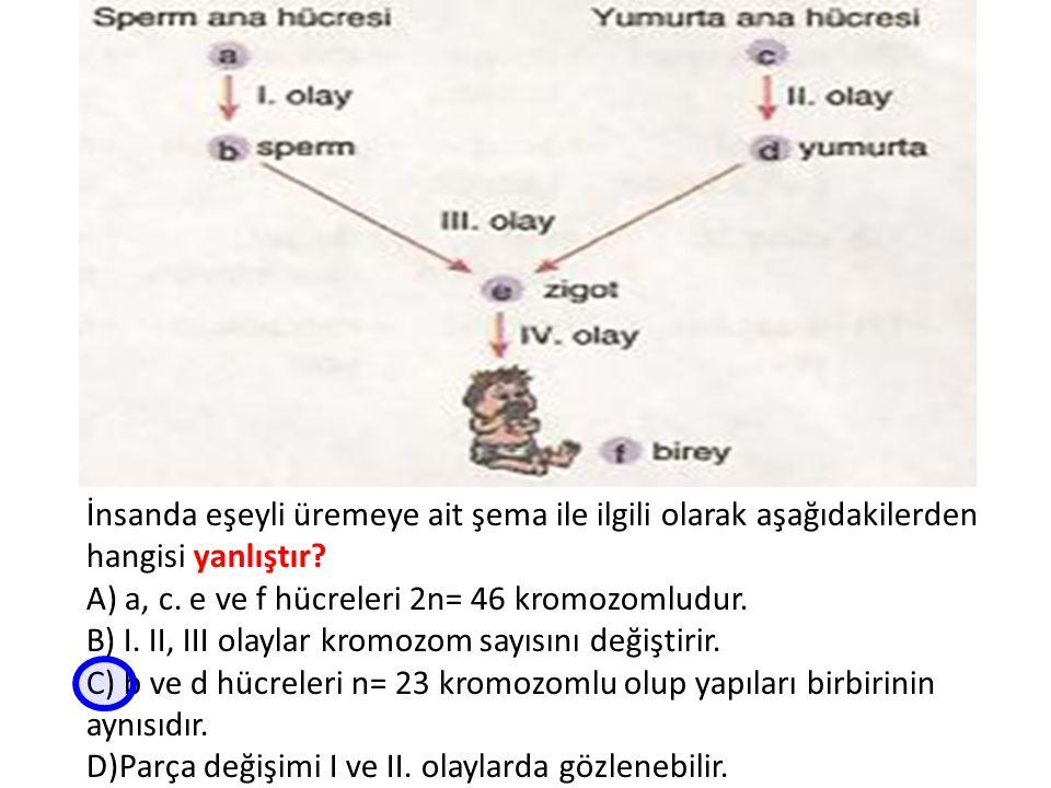 İnsanda eşeyli üremeye ait şema ile ilgili olarak aşağıdakilerden hangisi yanlıştır? A) a, c. e ve f hücreleri 2n= 46 kromozomludur. B) I. II, III ola