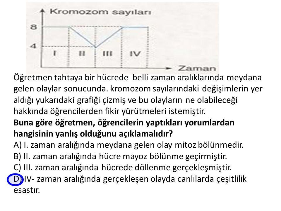 Öğretmen tahtaya bir hücrede belli zaman aralıklarında meydana gelen olaylar sonucunda. kromozom sayılarındaki değişimlerin yer aldığı yukarıdaki graf