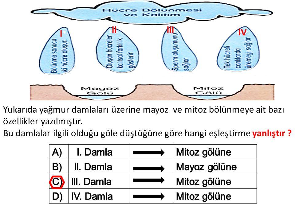 Yukarıda yağmur damlaları üzerine mayoz ve mitoz bölünmeye ait bazı özellikler yazılmıştır. Bu damlalar ilgili olduğu göle düştüğüne göre hangi eşleşt
