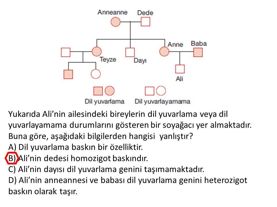 Yukarıda Ali'nin ailesindeki bireylerin dil yuvarlama veya dil yuvarlayamama durumlarını gösteren bir soyağacı yer almaktadır. Buna göre, aşağıdaki bi