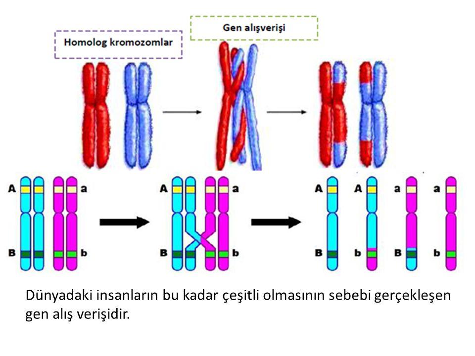 Dünyadaki insanların bu kadar çeşitli olmasının sebebi gerçekleşen gen alış verişidir.