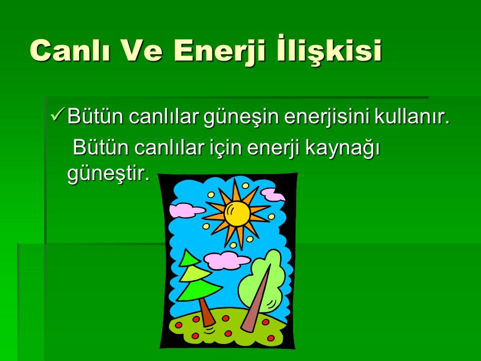Canlı Ve Enerji İlişkisi Bütün canlılar güneşin enerjisini kullanır. Bütün canlılar güneşin enerjisini kullanır. Bütün canlılar için enerji kaynağı gü