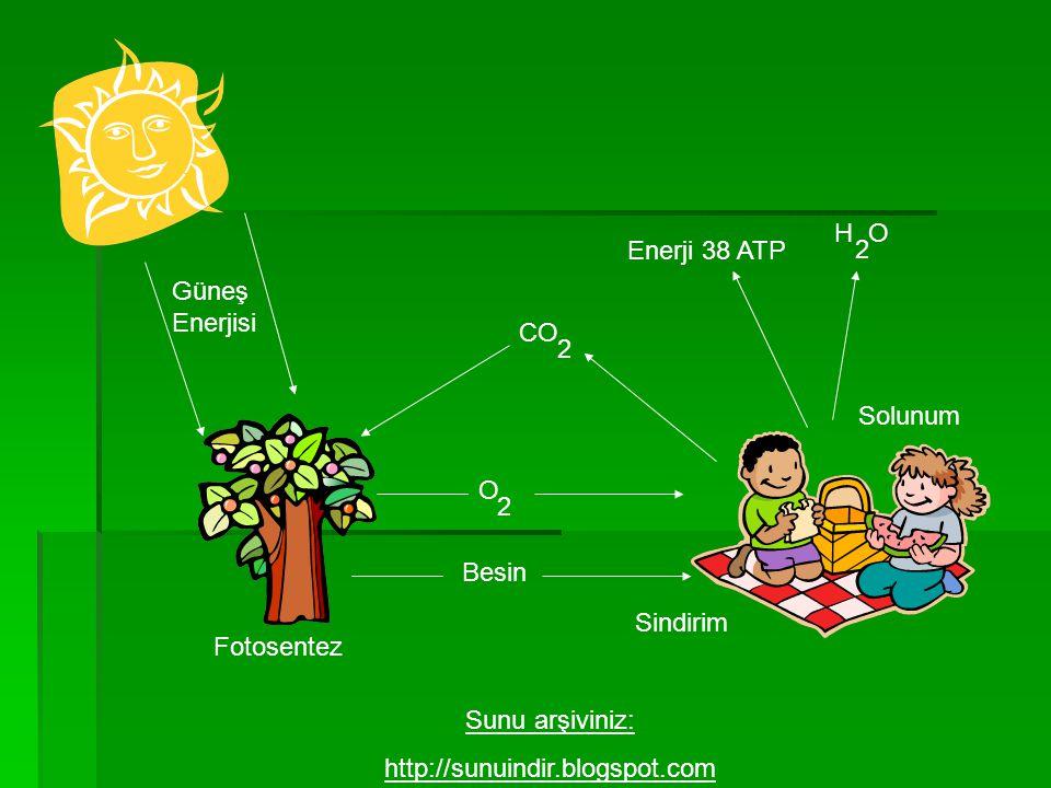Güneş Enerjisi Fotosentez Besin O 2 CO 2 Solunum Enerji 38 ATP H O 2 Sindirim Sunu arşiviniz: http://sunuindir.blogspot.com