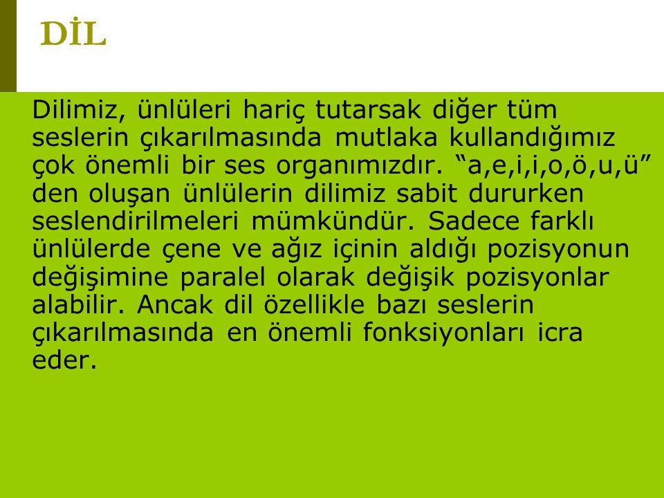 """www.turkceciler.com DİL Dilimiz, ünlüleri hariç tutarsak diğer tüm seslerin çıkarılmasında mutlaka kullandığımız çok önemli bir ses organımızdır. """"a,e"""