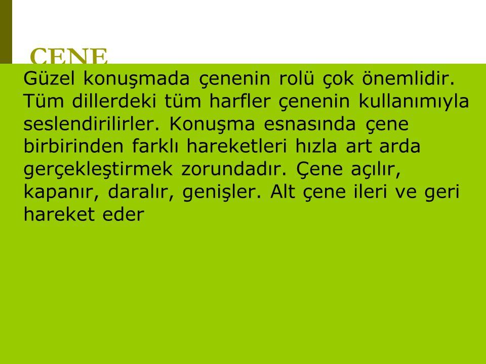 www.turkceciler.com ÇENE Güzel konuşmada çenenin rolü çok önemlidir. Tüm dillerdeki tüm harfler çenenin kullanımıyla seslendirilirler. Konuşma esnasın