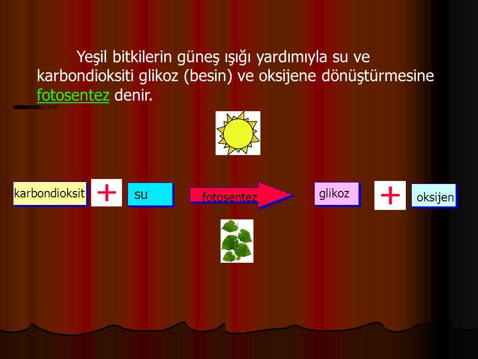 Yeşil bitkilerin güneş ışığı yardımıyla su ve karbondioksiti glikoz (besin) ve oksijene dönüştürmesine fotosentez denir. KARBONDIOKSITSUBESINOKSIJENGÜ